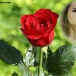Hermoso fotomontaje de rosa roja