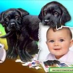 Montaje de cachorritos portando foto