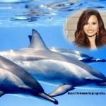 Fotomontaje de delfines