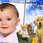 Fotomontaje de perrito y gatitos