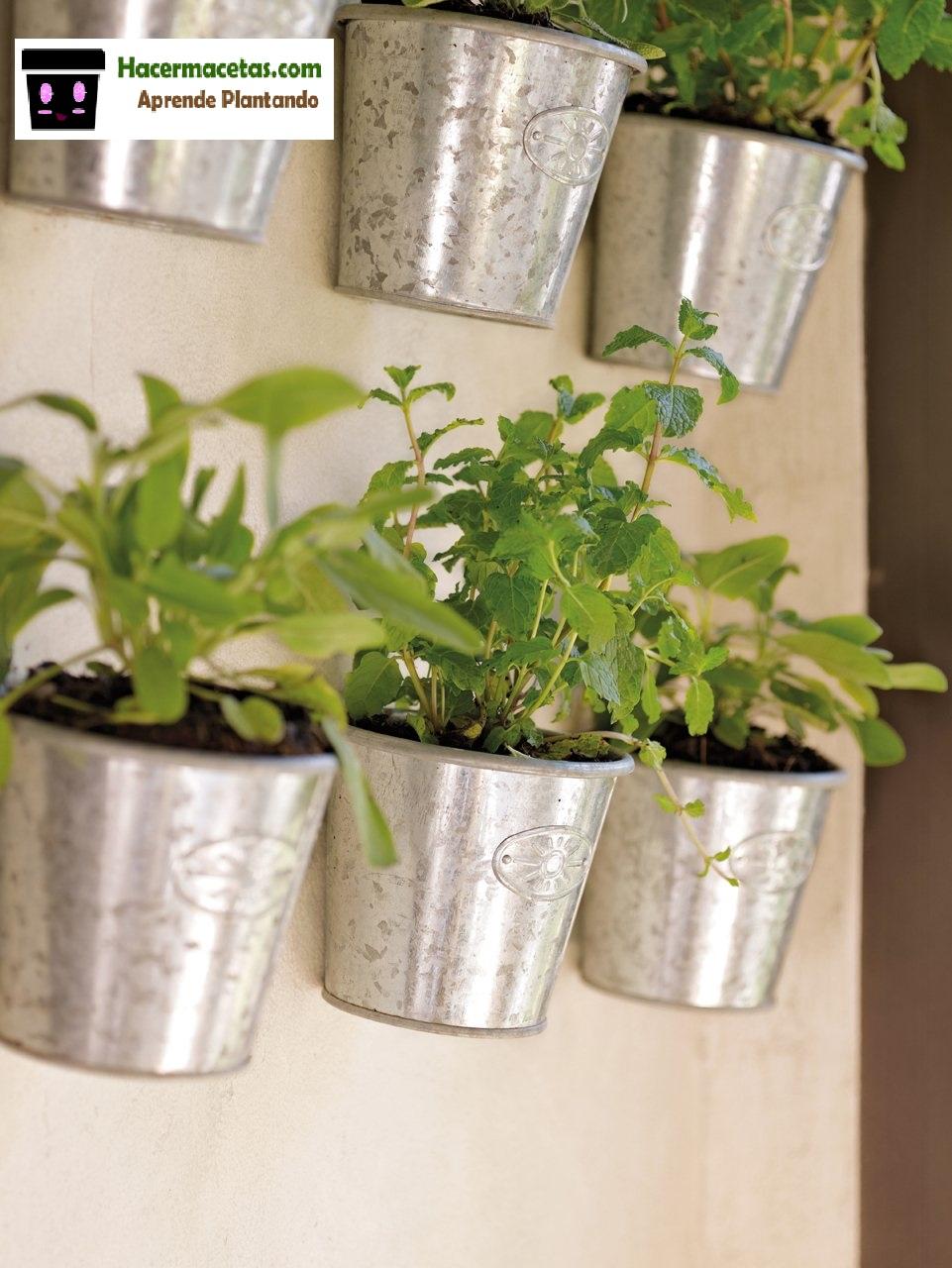 Plantas de interior y las macetas mas ideal y lindas para estas - Macetas para pared ...