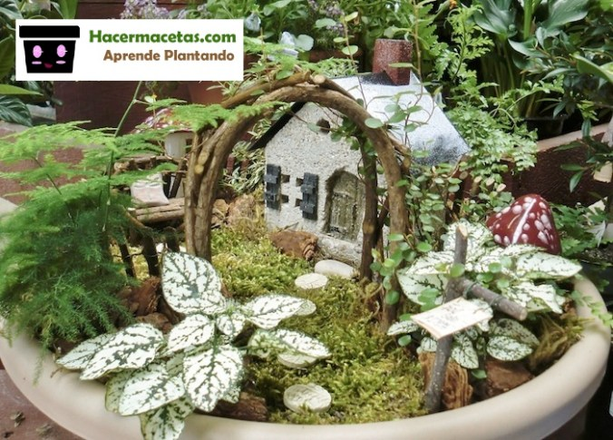 Macetas con Mágicos jardines miniaturas
