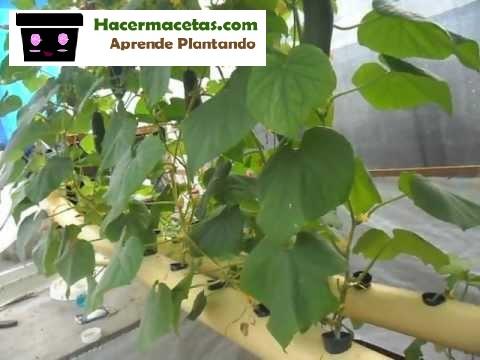 cultivando en casa con hidroponico