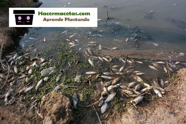 lago contaminado por el uso de fertilizantes quimicos