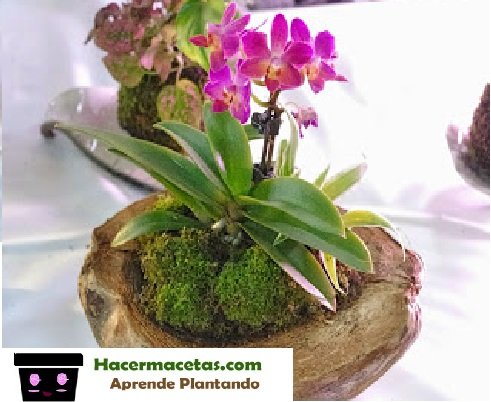 macetas para orquídeas los mejores consejos para tus orquideas