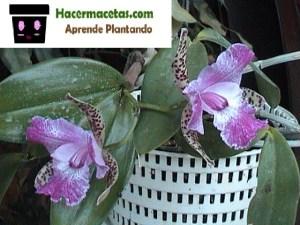 macetas de plastico para orquideas improvisada