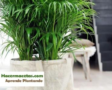 Plantas de interior y las macetas mas ideal y lindas para for Palmeras plantas de interior