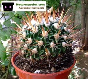 cactus con espinas como hjas