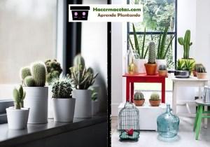 cactus para decorar tus ventanas una eco decoracion