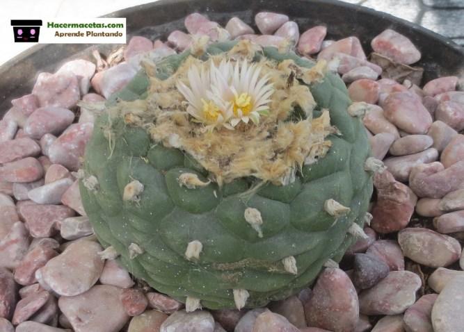 riego de cactus