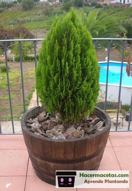 Maceteros de madera con barriles de vino reciclados pinos saludabes