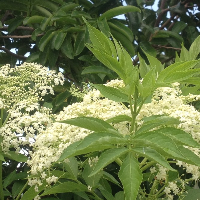 una planta maravillosa con flores hermosas
