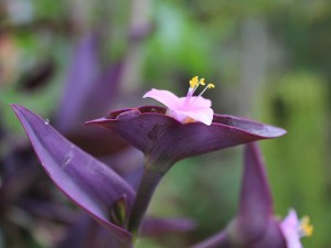 Hacermacetas.com purpurina