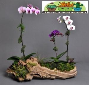 Macetas Orgánicas de Madera para orquídeas bonsay