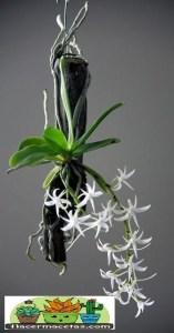 Macetas Orgánicas de Madera para orquídeas pequeas