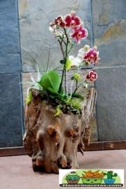 Macetas Orgánicas de Madera para orquídeas grandes