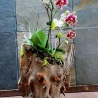 Macetas Orgánicas de Madera para orquídeas.