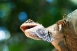 トカゲを飼育するときにオススメの餌を紹介!!
