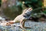 トカゲは何を食べるの?トカゲの飼育にオススメの餌を紹介
