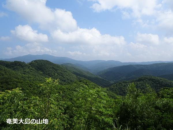 奄美大島の山地