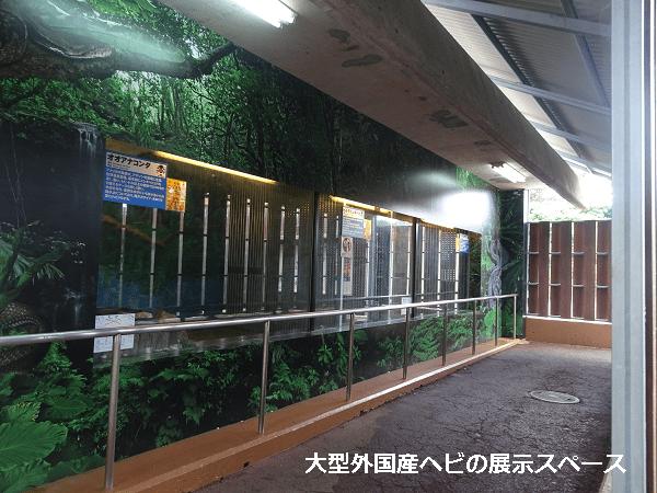 大型外国産ヘビの展示