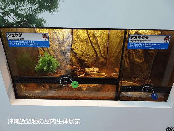 沖縄近辺種の屋内生体展示