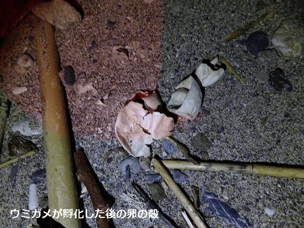 海亀が孵化した後の卵の殻