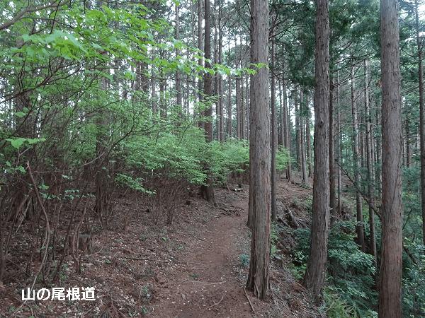 房総半島の山の尾根道