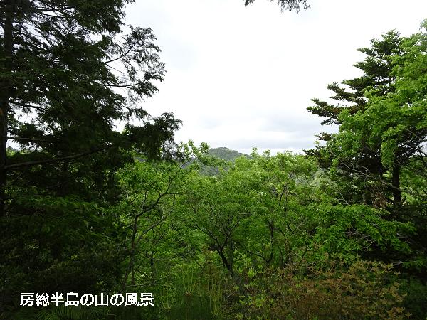 房総半島の山の風景