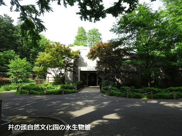 井の頭自然文化園の水生物館
