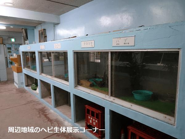 周辺地域のヘビ生体展示コーナー