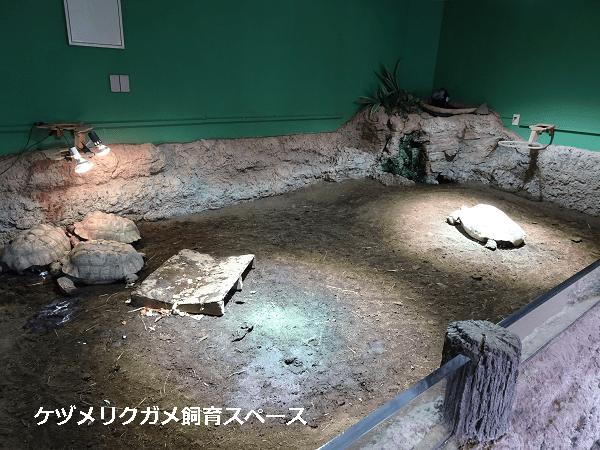 ケヅメリクガメ飼育スペース
