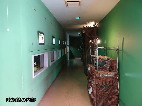 陸族館の内部