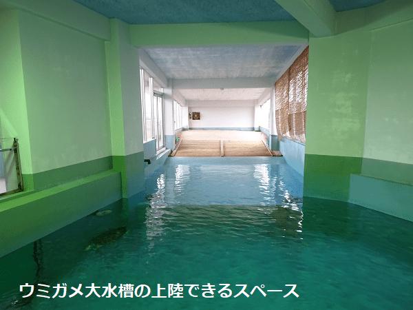 ウミガメ大水槽の上陸できるスペース