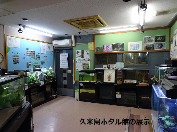 久米島ホタル館の展示