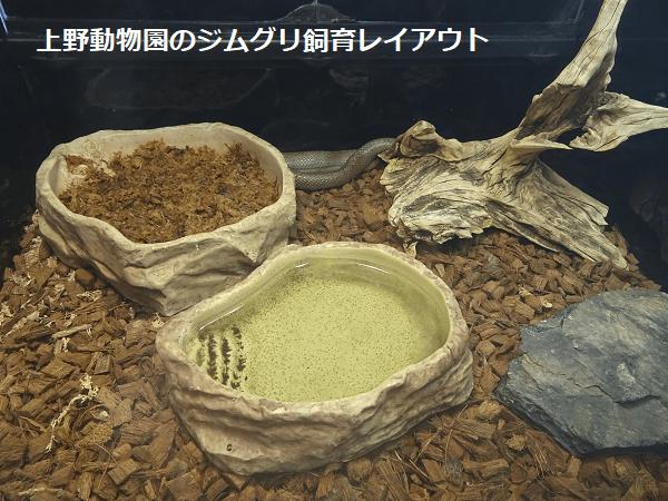 上野動物園のジムグリ飼育レイアウト