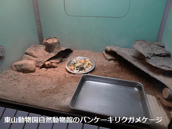 東山動物園自然動物館のパンケーキリクガメケージ