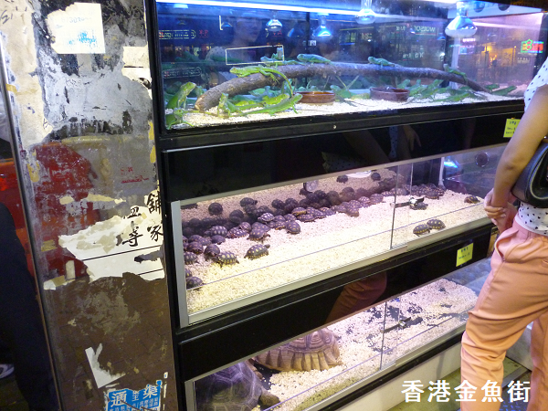 香港金魚街