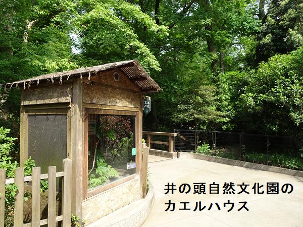 井の頭自然文化園のカエルハウス