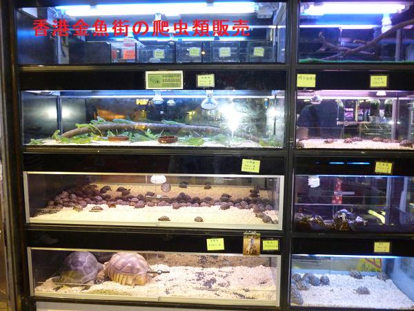香港金魚街の爬虫類販売