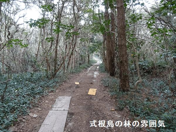 式根島の林の雰囲気2