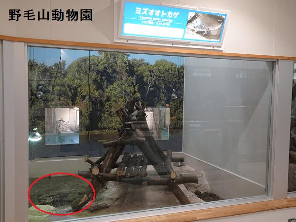 野毛山動物園のミズオオトカゲ