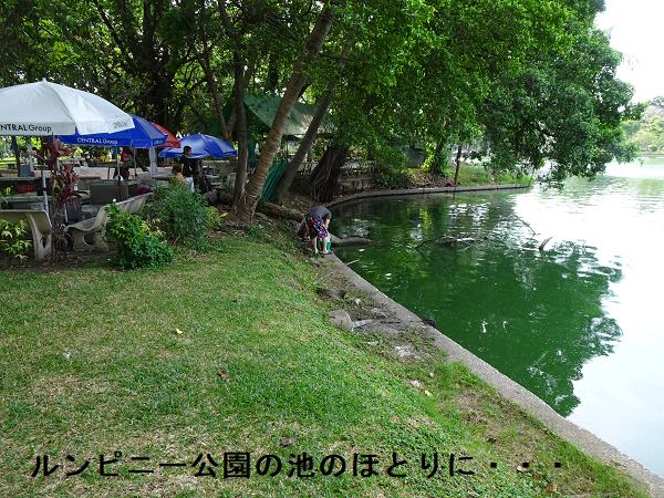 ルンピニー公園の池のほとりに・・・