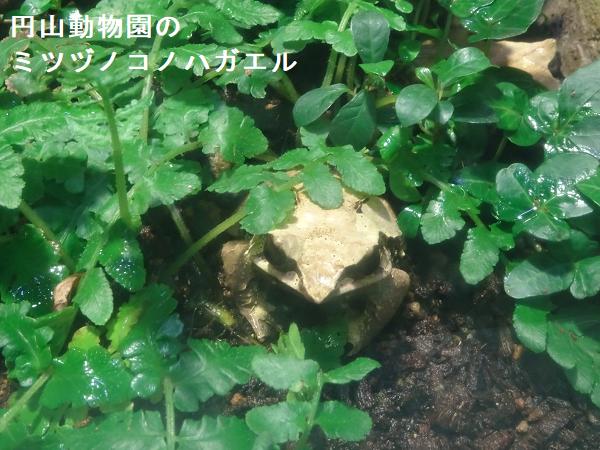 円山動物園の飼育ケージ