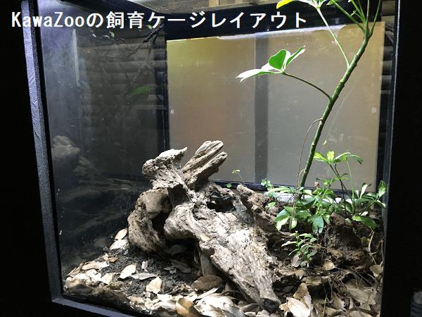 KawaZooの飼育ケージレイアウト