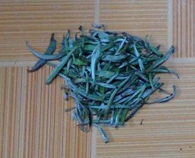 Fresh tea buds