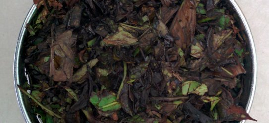 Oxidized young tea leaves