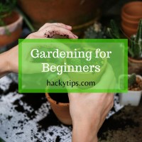 8 Gardening Tips to Grow Vegetables at Home