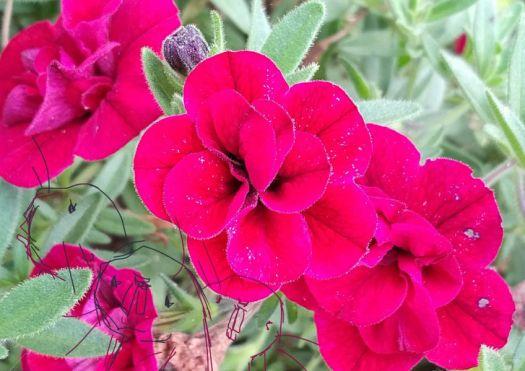 3赤い花と3はだねず