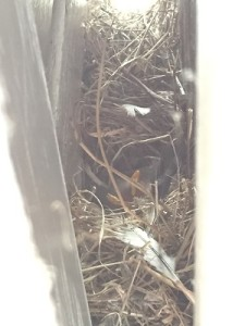 Bird's nest behind the door